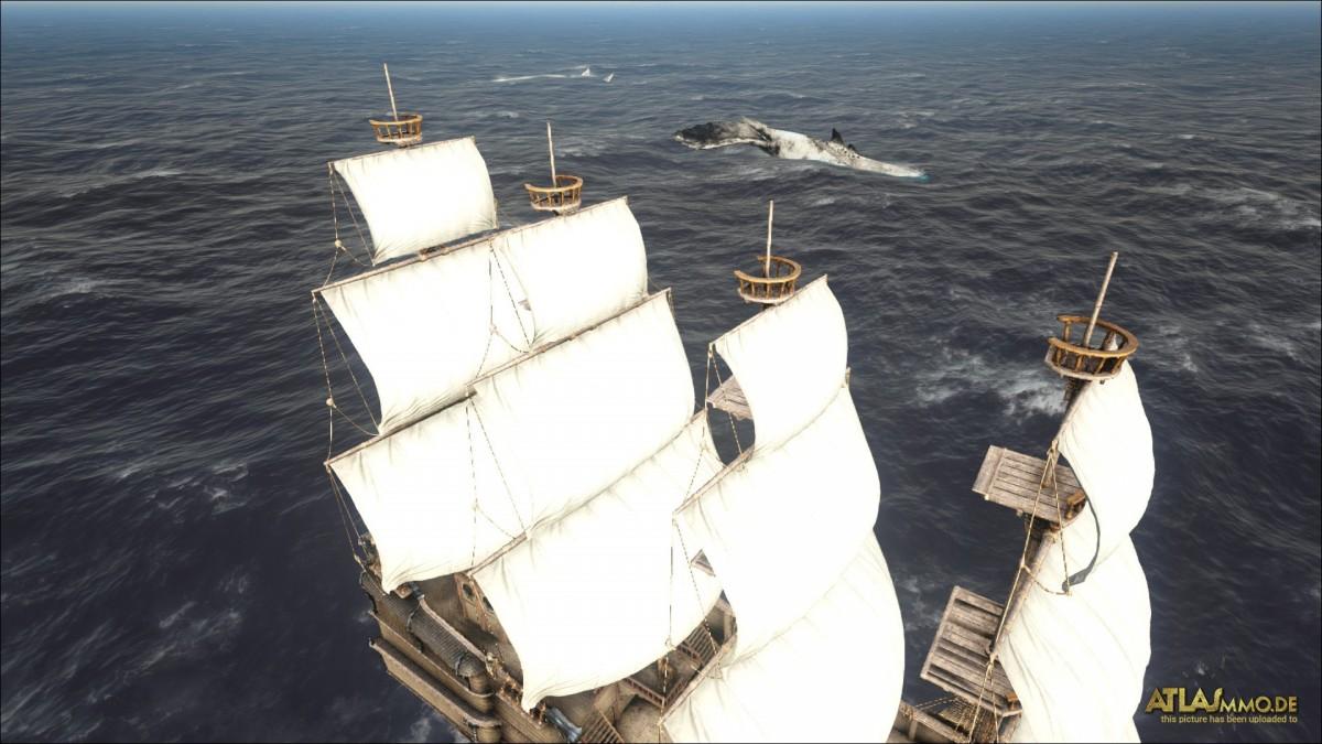 Besuch auf hoher See